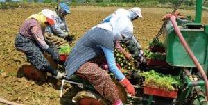Tarım sektöründeki ücretsiz aile işçileri eksik istihdamı oluşturur.