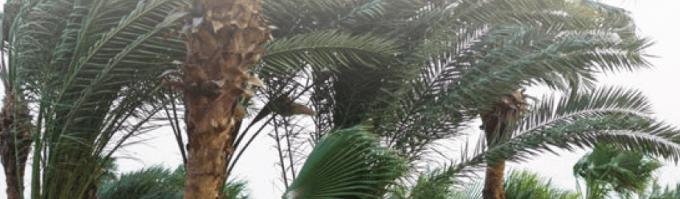 Rüzgâr Türleri ve Özellikleri Nelerdir? 3 – muson ruzgari