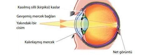 Göz | Duyu organları | Biyoloji 2