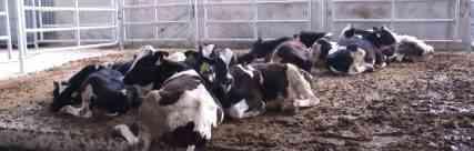 Tarım ve Hayvancılık Sektörünün Sosyal, Kültürel Hayat Üzerindeki Etkileri